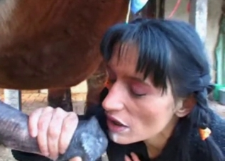 Horse cum getting gulped up on camera